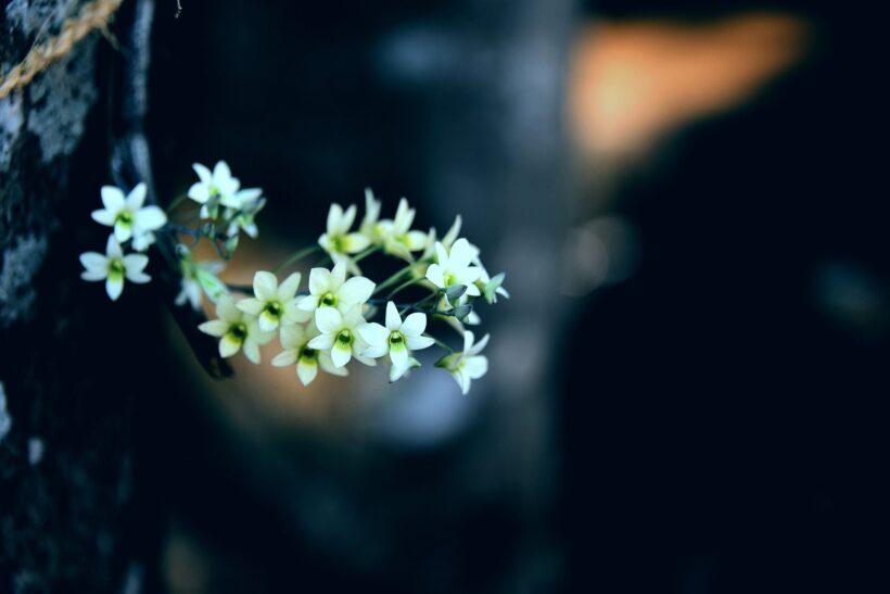 Ảnh hoa trắng làm quotes buồn cực đẹp