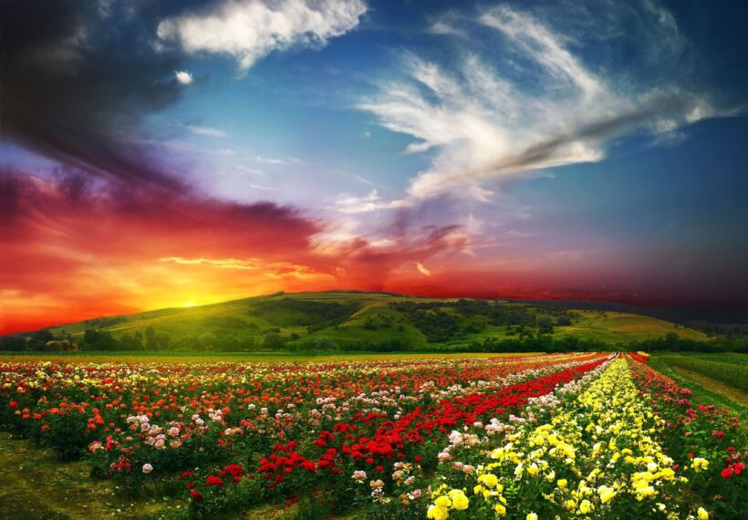 Ảnh hoàng hôn buồn, tắt nắng sau núi ở khu vườn hoa