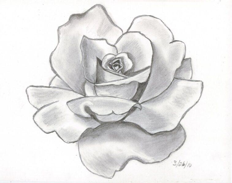 ảnh vẽ hoa hồng