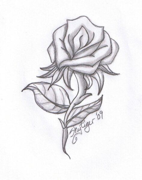 Ảnh vẽ hoa hồng đơn giản bằng bút chì