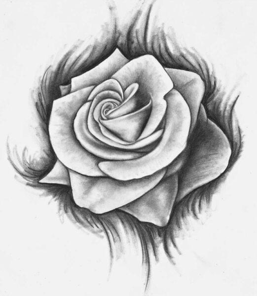 Bông hoa hồng đẹp được vẽ bằng bút chì