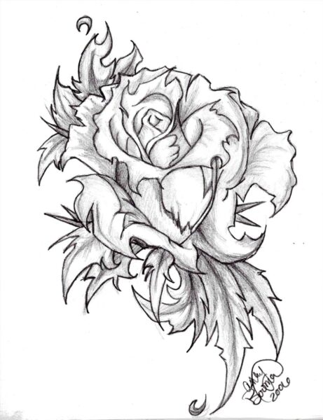 Bông hoa hồng được vẽ bằng bút chì