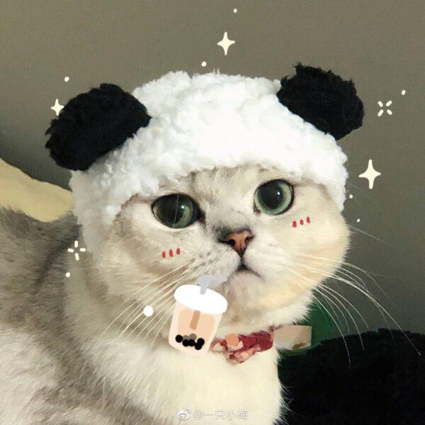 Hình ảnh avatar chú mèo dễ thương