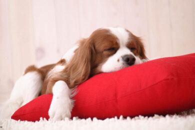 hình ảnh buồn ngủ cute dễ thương
