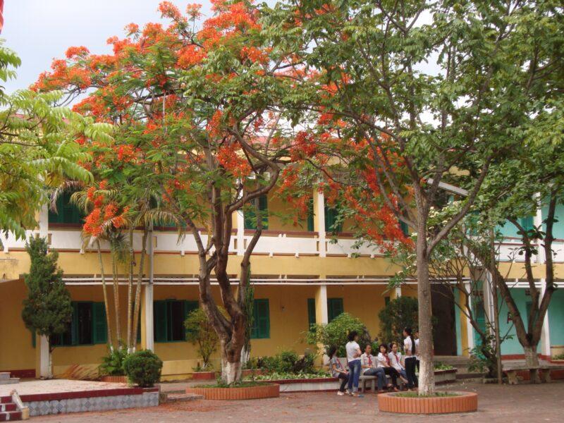 hình ảnh cây phượng ở sân trường