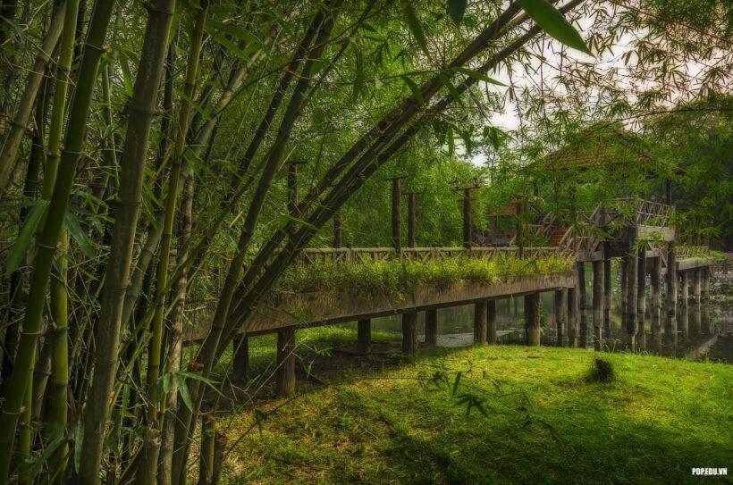 hình ảnh cây tre