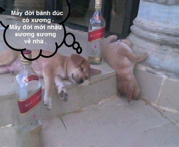Hình ảnh chế bỏ rượu để cmt facebook (6)