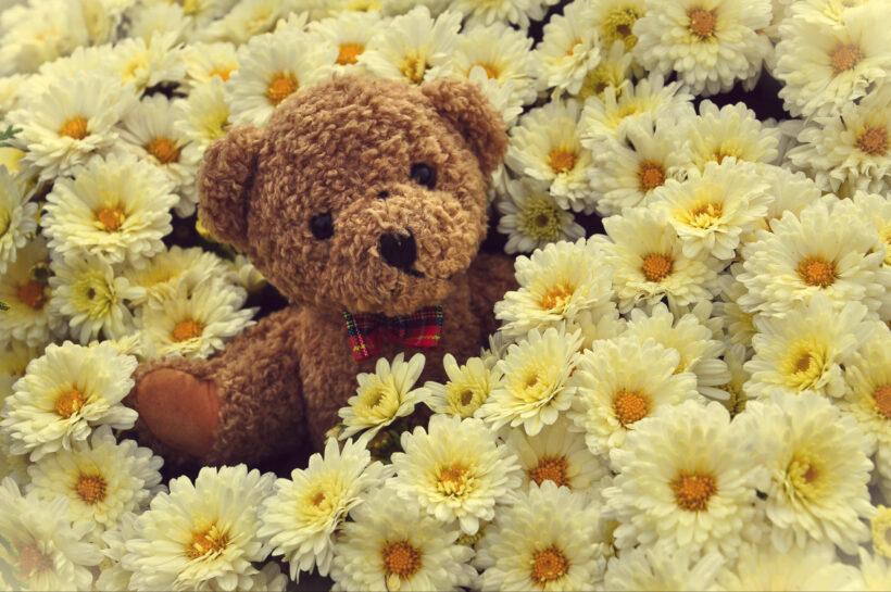 Hình ảnh gấu bông đẹp nhất thế giới