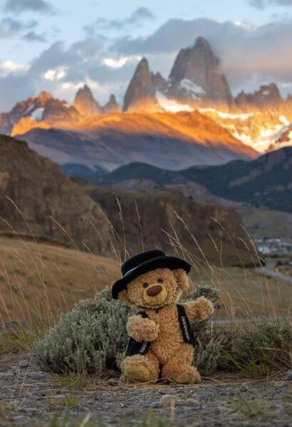 hình ảnh gấu bông trên đồi cỏ đẹp