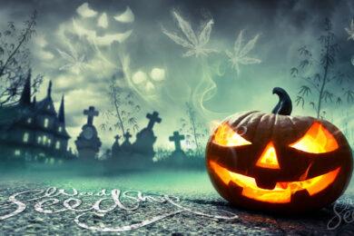 hình ảnh halloween quả bí ngô đẹp
