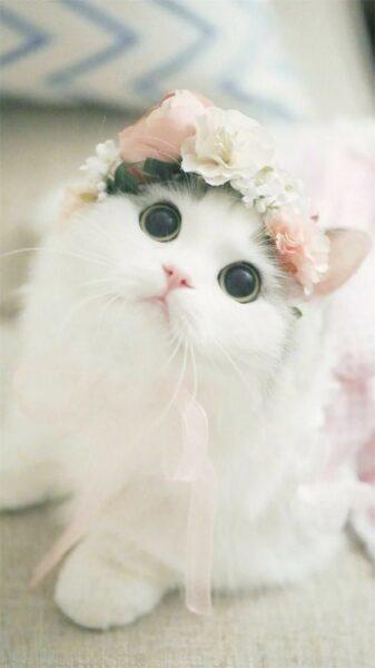 hình ảnh mèo Munchkin lông trắng đội mũ hoa cute