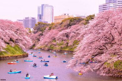 hình ảnh mùa xuân đẹp