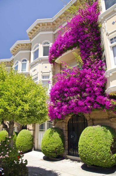 hình ảnh ngôi nhà đẹp có hoa giấy