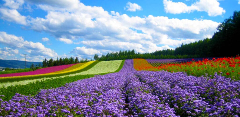 Hình ảnh vườn hoa Đà Lạt đẹp