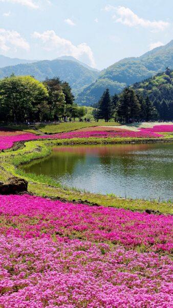 Hình ảnh vườn hoa đẹp bên dòng sông