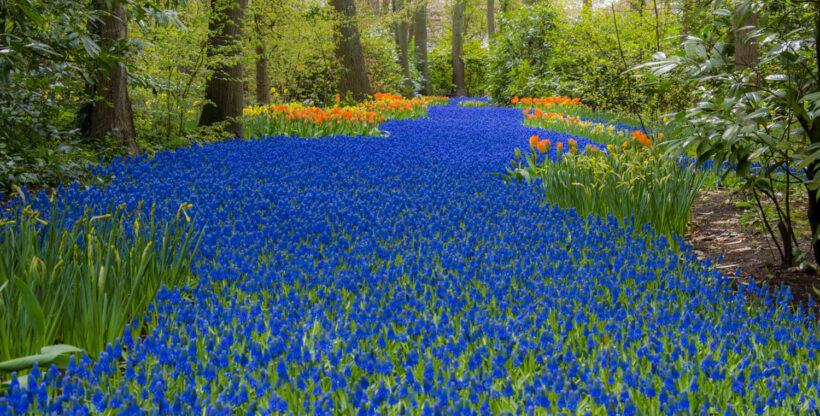 Hình ảnh vườn hoa đẹp mê ly