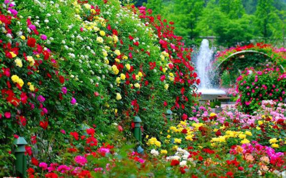 hình ảnh vườn hoa đẹp nhất