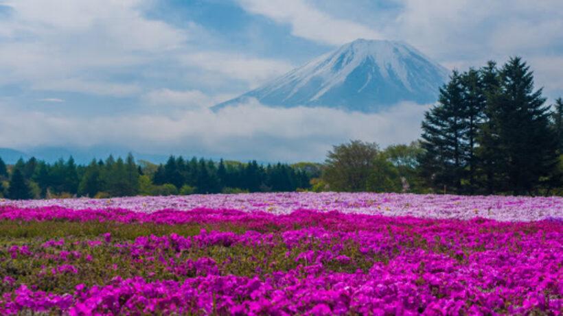 Hình ảnh vườn hoa đẹp ở Nhật Bản