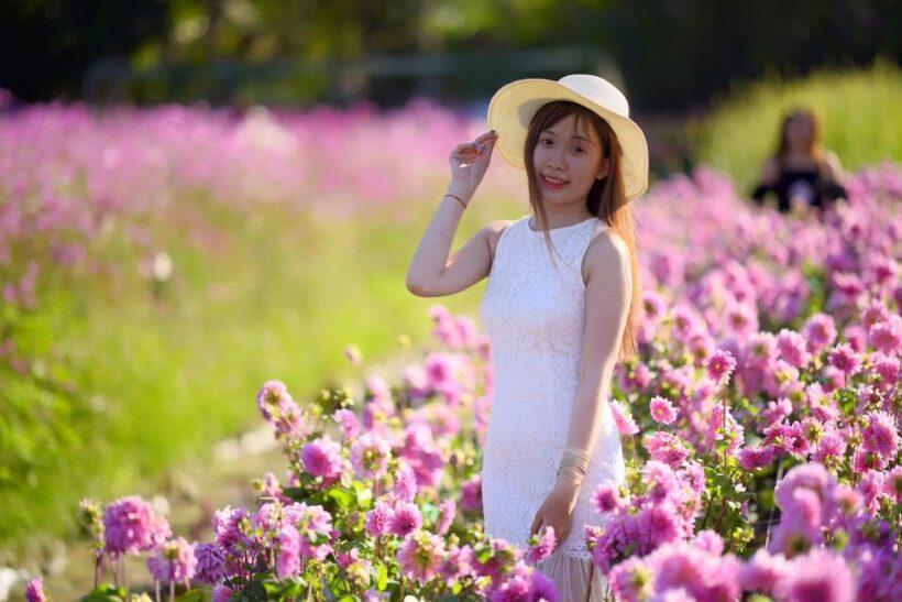 hình ảnh vườn hoa đẹp và cô gái