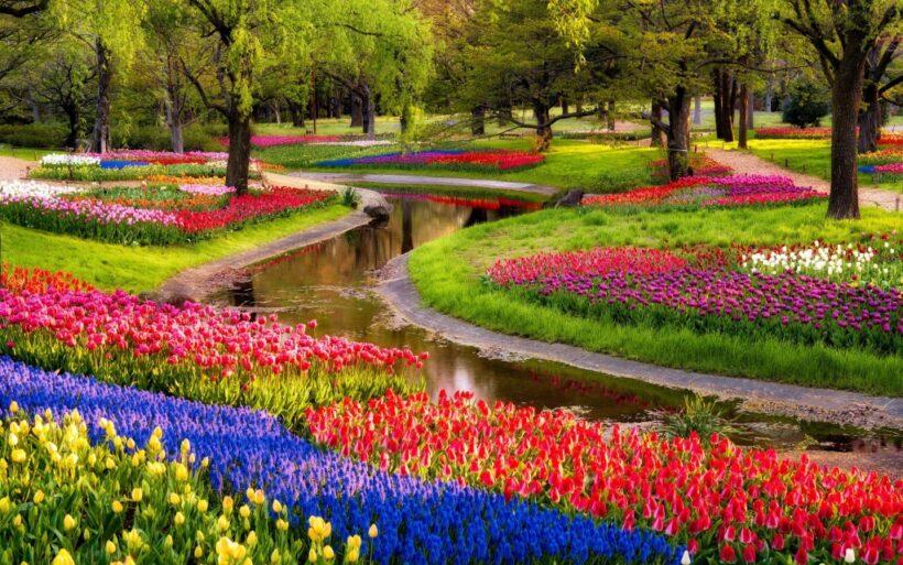Hình ảnh vườn hoa tràn ngập sắc màu