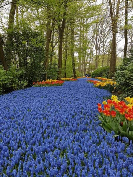 Hình ảnh vườn hoa xanh đẹp