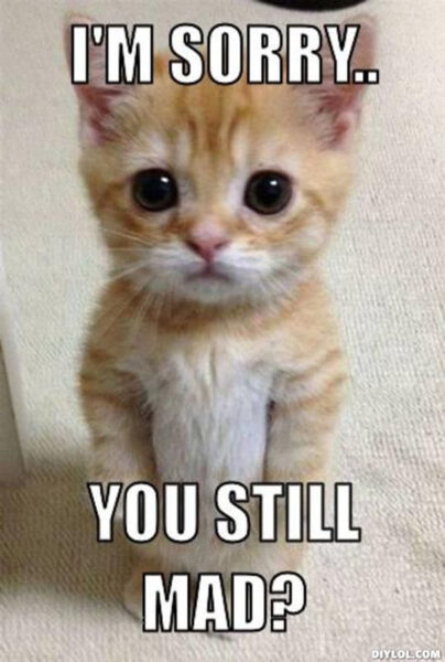 hình ảnh xin lỗi chú mèo dễ thương