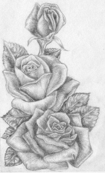 Hình hoa hồng được vẽ bằng bút chì