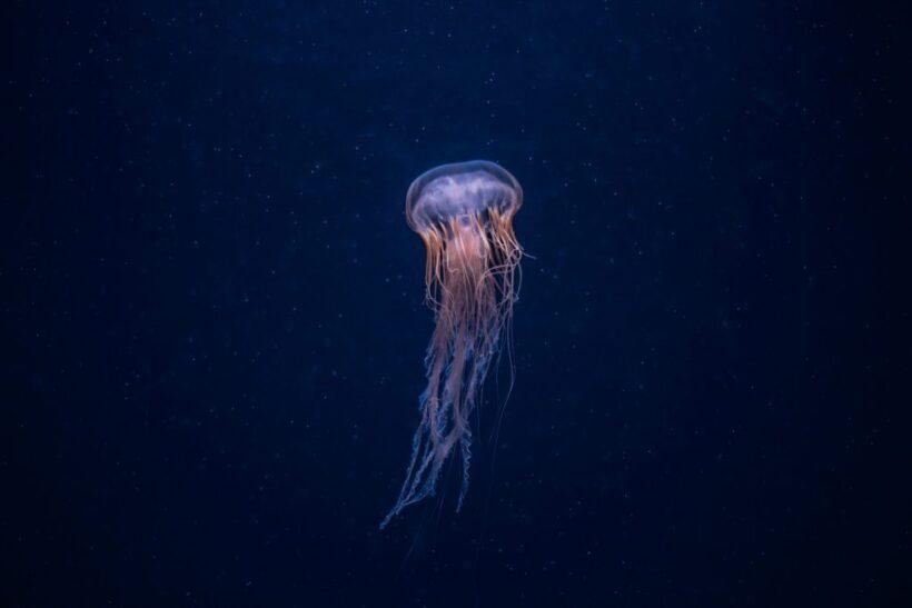 Hình nền con sứa lung linh trong lòng biển