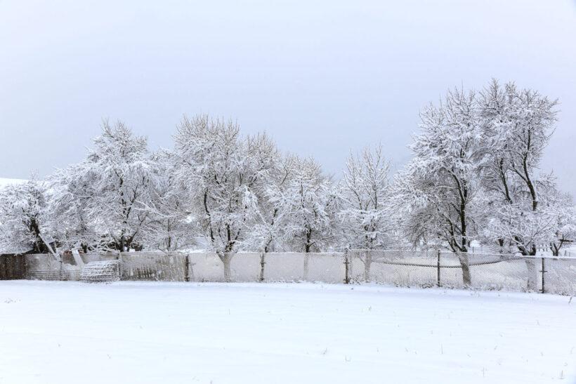 Hình nền mùa đông lạnh