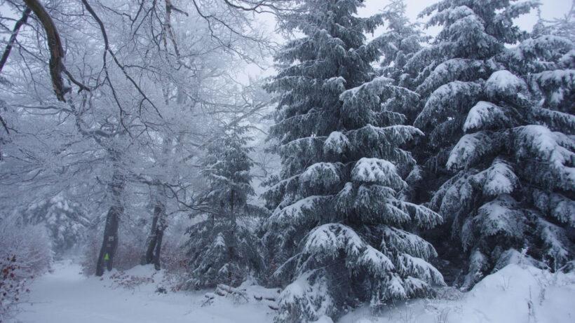 hình nền mùa đông lạnh trong con đường rừng