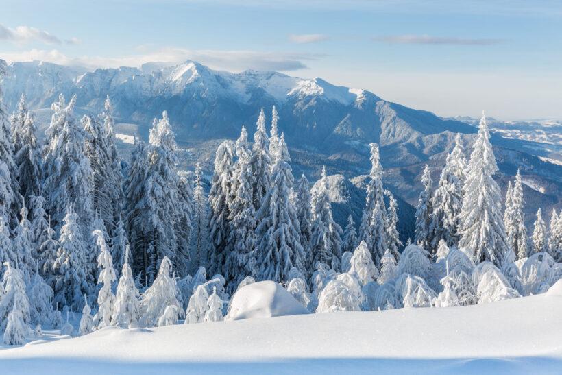 hình nền mùa đông lạnh tuyết phủ trên rừng