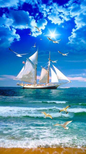 hình nền thuyền buồm trên biển và chim hải âu