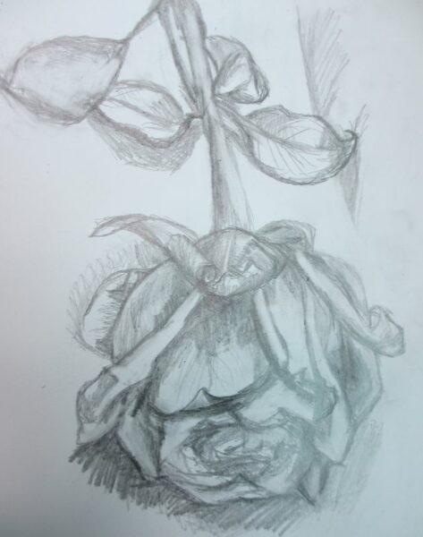 Hình vẽ hoa hồng đơn giản