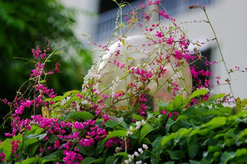 Phong thuỷ hoa tigon