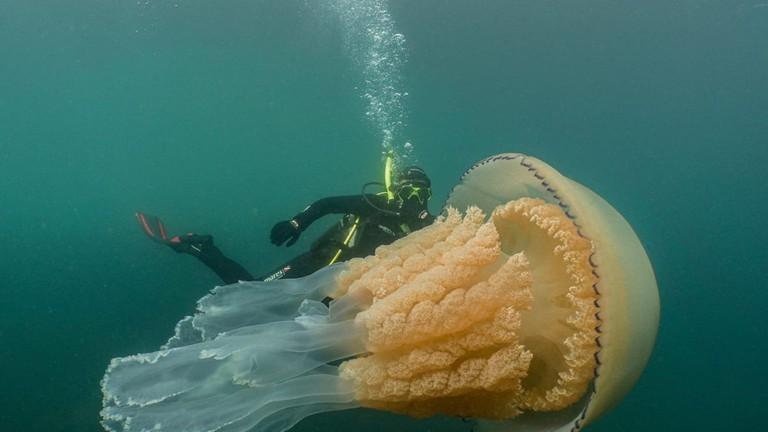Tải ảnh con sứa đẹp làm hình nền (4)