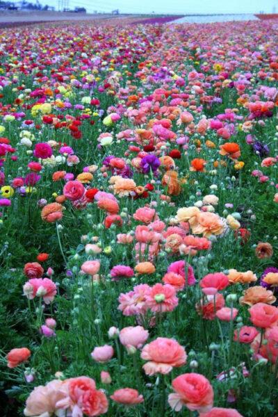 Tải ảnh vườn hoa đẹp