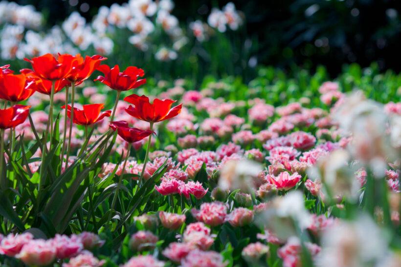 Tải hình ảnh vườn hoa đẹp