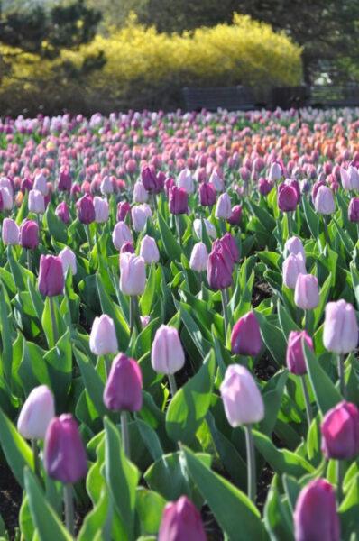 Tải hình nên vườn hoa đẹp cho điện thoại