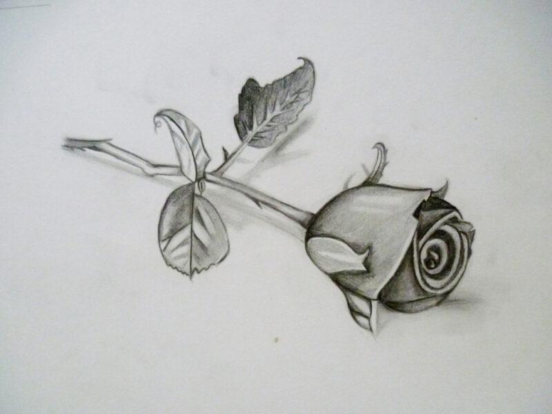 Tranh vẽ bông hoa hồng bằng bút chì