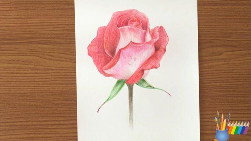 Tranh vẽ bông hoa hồng cực đẹp