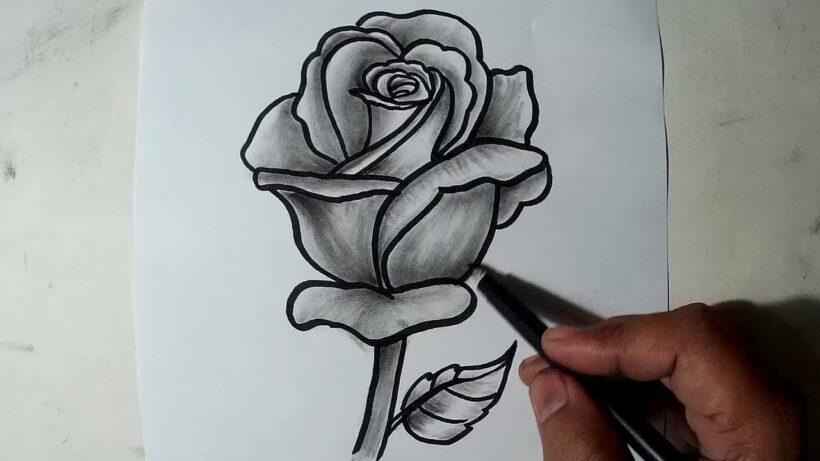 Tranh vẽ hoa hồng bằng bút chì ấn tượng