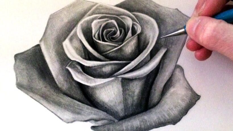 Tranh vẽ hoa hồng bằng chì ấn tượng