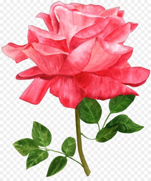 Tranh vẽ hoa hồng bằng màu nước