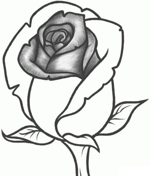 Tranh vẽ hoa hồng đẹp bằng bút chì