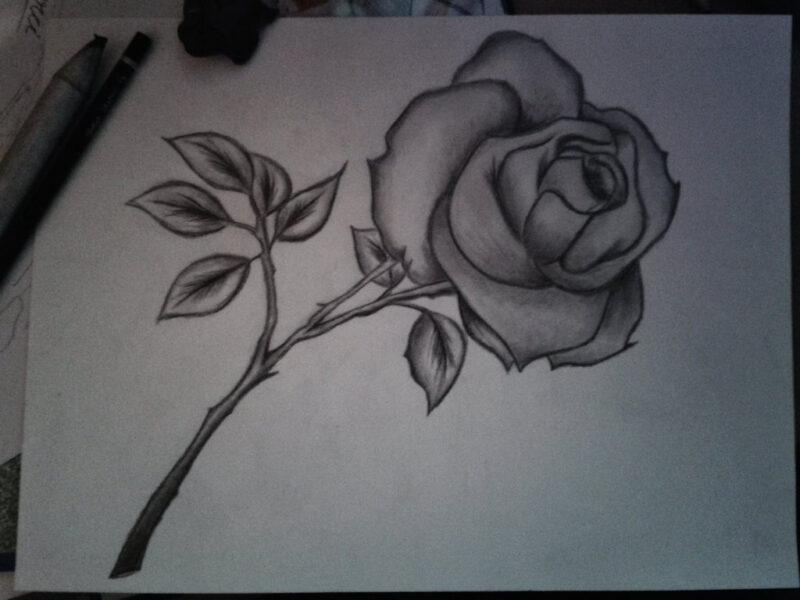 Tranh vẽ hoa hồng đẹp nhất bằng bút chì