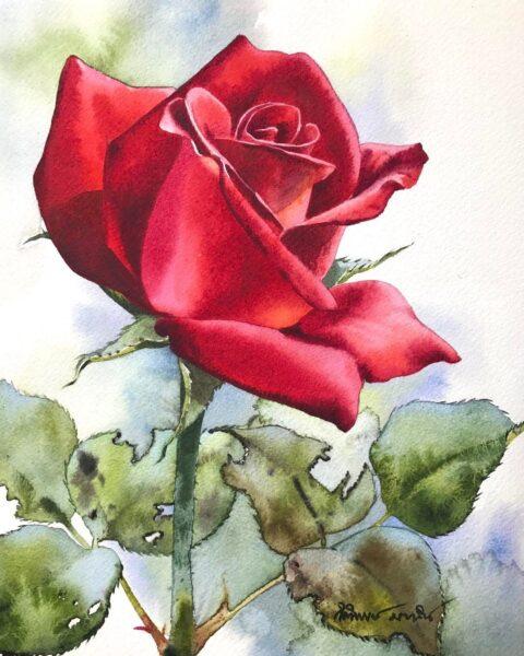 Tranh vẽ hoa hồng đỏ đẹp