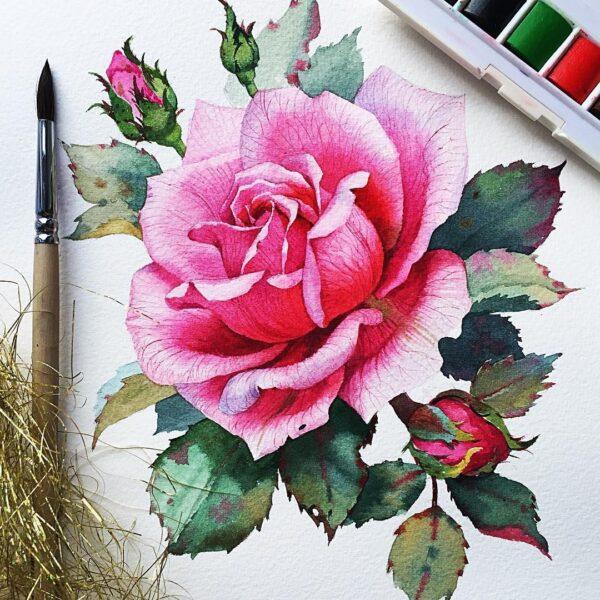 Tranh vẽ hoa hồng màu hồng đẹp