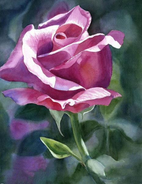 Tranh vẽ hoa hồng tím đẹp