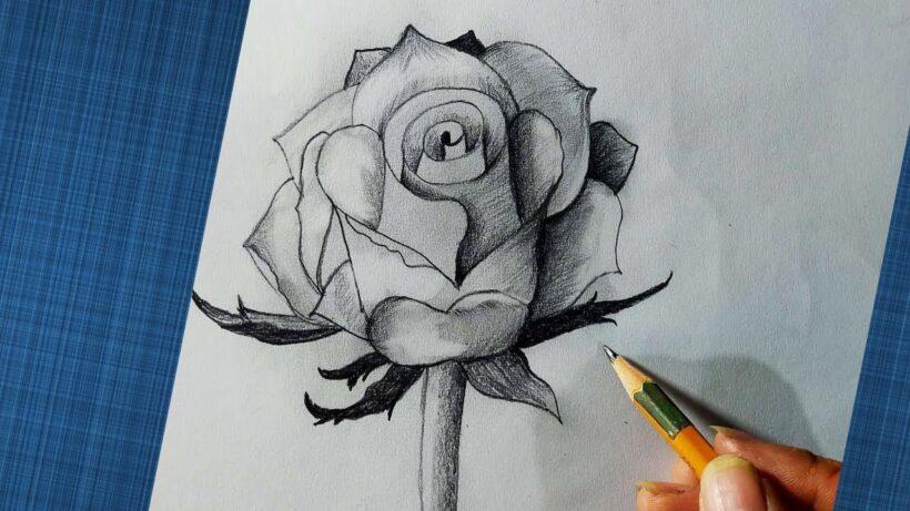 Vẽ hoa hồng 3D bằng bút chì