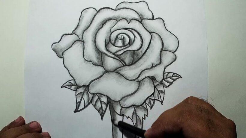 vẽ hoa hồng bằng bút chì đẹp